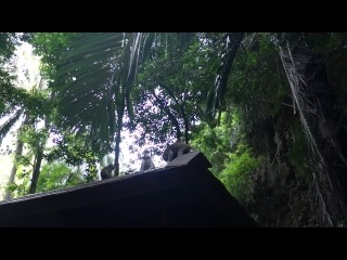 Встреча с обезьянами на тропе между Восточным Рейли и Пранангом